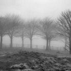 Fog by ClaireWroe
