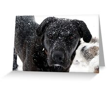 Jakes, Snow Covered Face :)) 1-29-2010 Greeting Card