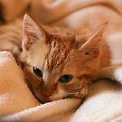 sweet cat by womoomow