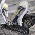 Pelican by Dennis Cheeseman