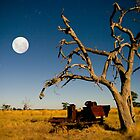 Tree by Moonlight by Murray Wills