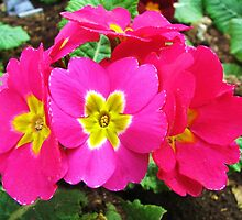 Beautiful colors by rasim1