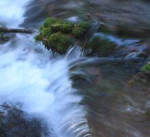 Jack Spring by WaterInMotion