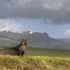Hearst Castle Elephant Seal by Cathy L. Gregg
