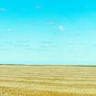Expansive South Dakota Field  by kclcarlson