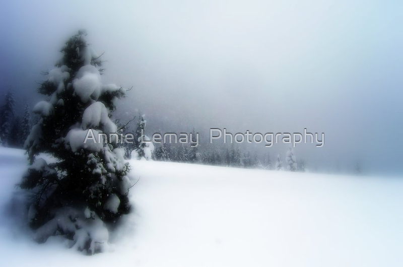 Winter Wonderland by Annie Lemay  Photography