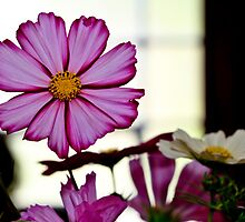 Cosmos by Eric Waring