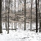 Winter in the Woods by mwfoster