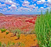 Painted Desert with Bush by lckt13