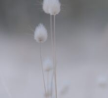 Bunny Tails by Caroline Gorka