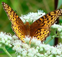 Flutterby on Flower by vigor