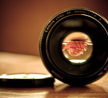 Lens through Lens by Lorraine Creagh
