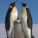 Penguins - Wild & Free by Steve Bulford