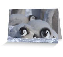Emperor Penguin Chicks - Snow Hill Island Greeting Card