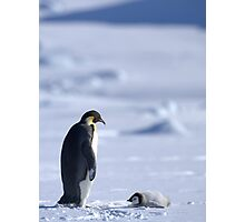 Emperor Penguin and Chick - Snow Hill Island Photographic Print