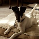 Smooth Fox Terrier in Sepia by Charlotte Yealey