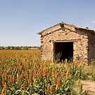Old Shed in the Languedoc Vineyards by Nick Whillis