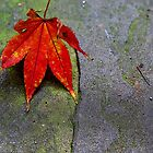 Leaf on Slate by Karen Checca