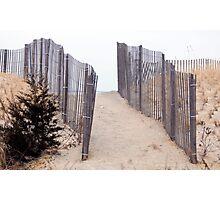 Path to the Ocean in Cape Cod Photographic Print