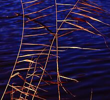 Reed in a blue lake by christopher363