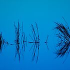 Blue Reflect by Jerry Segraves