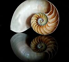 Shell Symmetry by Nancy Bray