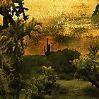 Desert Dawn by CarolM
