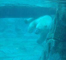 Polarbear At Play by mikeytheblack