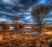 3 Trees by Bob Larson