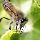 Bee by Michael Walker
