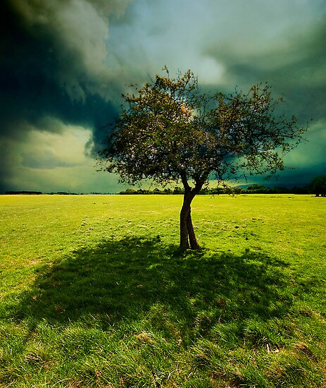 Green Shade by Gerry Chaney