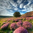 Heather &amp; Rowan... North Yorkshire Moors. by Ian Snowdon /     www.downtoearthimages.co.uk