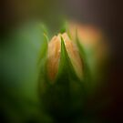 Bud Seeking Heaven © by Vicki Ferrari