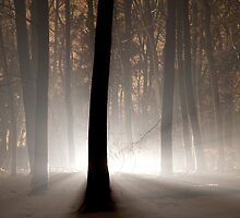 Mysterious Light II by Joop Snijder