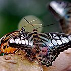 Butterfly Gossip by Pamela Hubbard