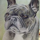 A French Bulldog Deep in thought by boxagirl