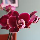 Burgundy Orchid by Sherry Freeman