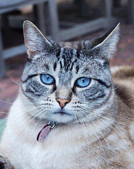 Elliot ...gorgeous blue-eyed boy by Marjorie Wallace