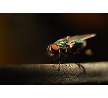 Pretty Pest Photographic Print