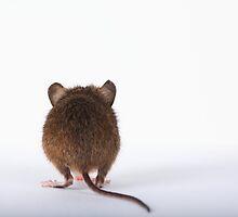 Shy  Mouse by EUNAN SWEENEY