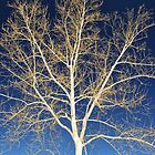 Polarizing Tree by heavyh20