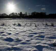 winter wonderland by codaimages