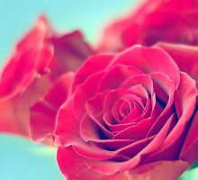 Roses by Colleen Rudolph