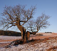 Bradgate Park in Winter by Andy Stafford