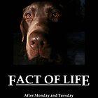 ~ Fact Of Life ~ by Allen Lucas