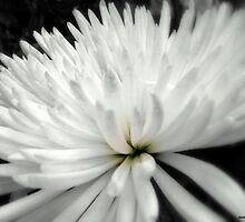 'Mum in White! by naturelover