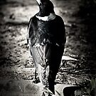 Magpie by sparrowdk