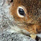 Squirrel nut kin. by kkimi88