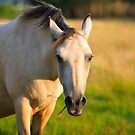Horse . Ireland by EUNAN SWEENEY