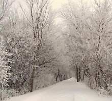 Frosted Woods by lorilee